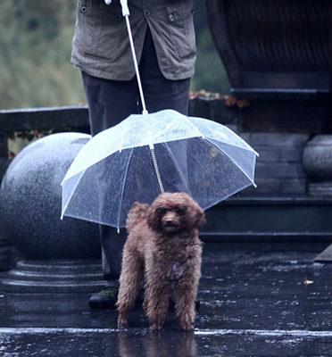 paraguas mascota perro